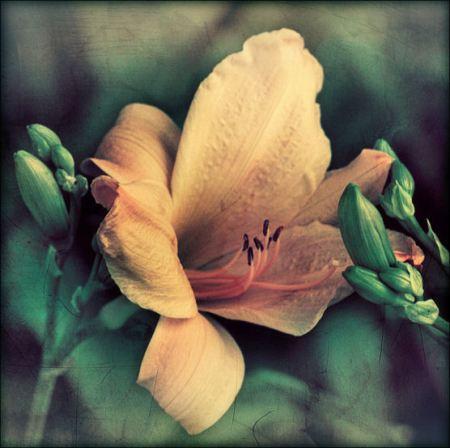 I sent you flowers, de Pahness