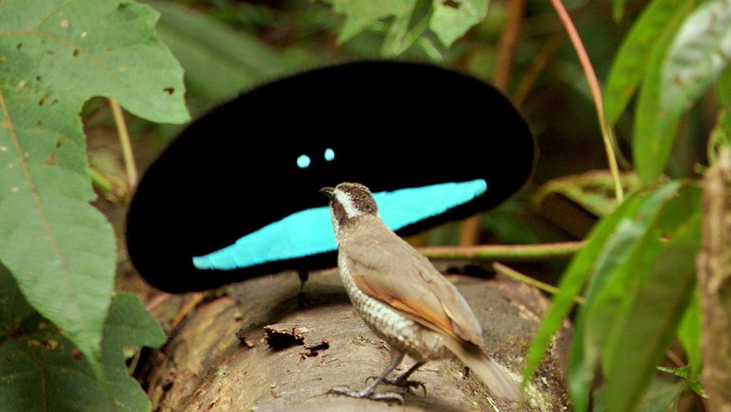 paradise_bird.jpg
